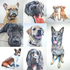 Some of my recent dog portraits :-)