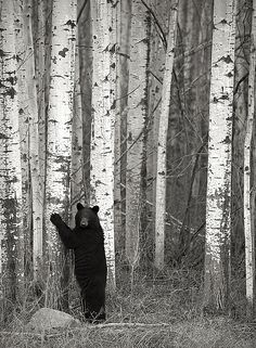 I absolutely LOVE this photo! - Tree Hugger