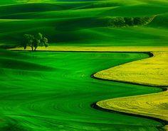 Praderas verdes y doradas.