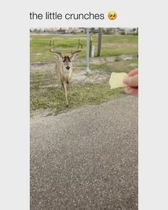 #animal #animals #nature #cute #love #wildlife #animallovers #animalvideos #animalsvideo Funny Animal Gifs, Funny Animal Photos, Cute Animal Pictures, Cute Funny Dogs, Cute Funny Animals, Cute Baby Animals, Happy Animals, Animals And Pets, Cute Ferrets