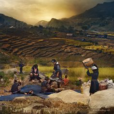 """Rice Harvest    Two and a half miles (4 km) from Sapa, is Catcat village. This is a traditional Hmong people town.  One of the largest ethnic minorities in Vietnam is the Hmong Tribe. Hmong originally means """"free people"""". They came from China, and now live in different regions throughout Vietnam.    Istvan Kadar Photography"""