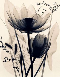 X-ray flowers. I love doing this! Let them drink up some contrast it's even more awesome!: