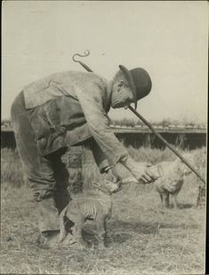 I love old photos and I love sheep. I found these a while ago and thought I'd share.