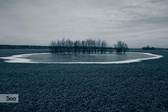 In the field.  Photo by Andriy Solovyov  on  www.solovyov.biz