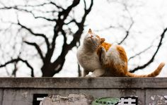 Easy Cat Care Tips: How To Fight Fleas