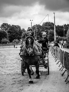 #Finistere #Bretagne #cheval breton - attelages à #Carhaix, en noir et blanc (12 photos) © Paul Kerrien  http://toilapol.net