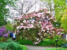 Plante si flori iubitoare de umbra