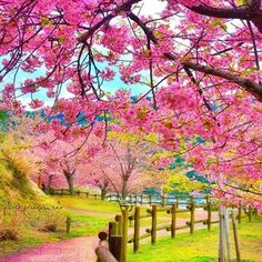 ✿.*・nao・*.✿ (@princess.nao) • Fotos y videos de Instagram Pink Nature, Outdoor Furniture, Outdoor Decor, Foto E Video, Golf Courses, Instagram, Landscape, World, Flowers