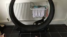 Ares & Apollo have only just started using this at 1 yrs old. Artemis is 13 weeks and already going for runs! @one_fast_cat #artemis #ares_apollo_artemis #bengal #charcoalbengal #bengalkitten #kittens #kitten #kittensofinstagram #cats #catsofinstagram #bengalsofinstagram #bengalcatsofinstagram #ig_bengals #bengalcatworld #charcoalbengalofinstagram #bengalcat_lovers #onefastcat #Regrann  Check out the Cat Exercise Wheel at: http://onefastcat.com