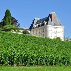 Vineyard in Epernay #champagne #wine