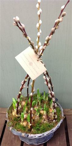 Narcissus Wigwam - we love this spring special by Andrew Fleming Florist