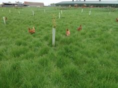 Some of our farmer Patrick's #happyeggs girls out roaming their lush green range   http://thehappyegg.co.uk