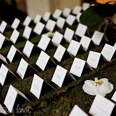 escort cards on a bed of moss