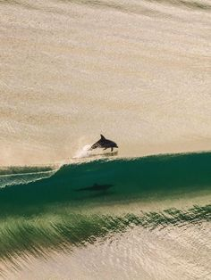 Dolphins having fun at Tweed Heads, Australia