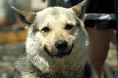 Those funny animals 11 | Oh, Those funny animals