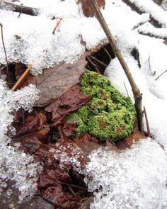 """Sam Calhoun on Instagram: """"Signs of life.  A little moss amongst the snow.  Bankhead National Forest, AL.  #snow #visitnorthal #explore #getoutstayout  #optoutside…"""""""