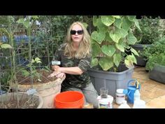 How to Grow Container Cucumbers by Nurse Amy - YouTube