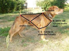 Saňový postroj pro velké psy - Mutt&Go
