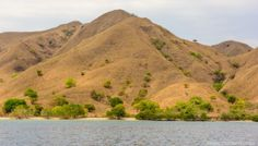 Komodo Islands Flores Indonesia - A World to Travel-29
