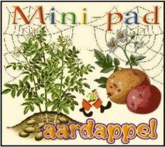 Mini-pad Aardappel :: mini-pad-aardappel.yurls.net