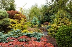 conifers, evergreen plants, foliage border by Janice LeCocq Photography