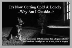 Do the right thing and don't be cruel. Bring your pet inside and protect it from the cold.
