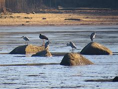 Animals, Grey Heron, Water Pond, Woodland Forest, Animales, Animaux, Animal, Animais