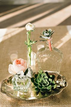 cute and simple succulent and glass vases decor