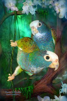 Pionus Parrots - mixed media digital painting by ©Carol Cavalaris (via FineArtAmerica)