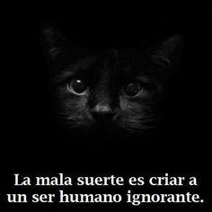 Gato negro y su suertuda compañia