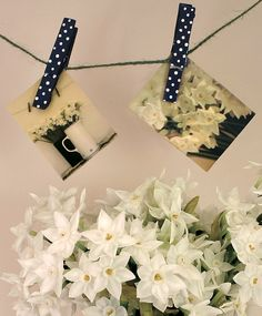 white narcissi, spotty pegs photographed by Sally Page