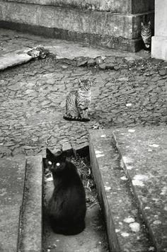 Black Cat Graveyard Cemetery | Cats in the cemetery, Lisboa 1994 © Gloria Rodriguez