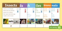 Image result for animal kingdom flip chart nz