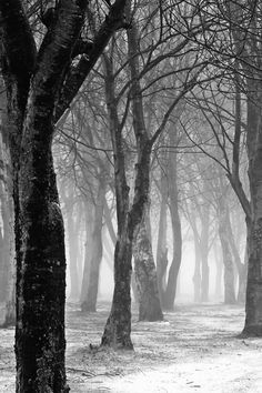 Good example atmospheric perspective. The high contrast with the up close view on the near trees fading to lighter and less detail presents the view very well.