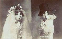 Cat Wedding by Print and Pulp, via Flickr