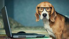 Ein langer Tag im Büro, aber wohin mit dem Hund? Warum den Hund nicht mit ins Büro nehmen! Erfahre hier, wie das klappt und was du beachten solltest.