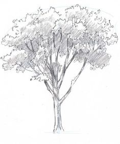 Trendy simple tree drawing sketches how to paint ideas Oak Tree Drawings, Tree Drawings Pencil, Tree Sketches, 3d Drawings, Landscape Drawings, Realistic Drawings, Landscape Art, Drawing Sketches, Drawing Tips