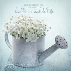 Old vintage metal watering can filled with white baby's breath gypsophila flowers on light blue shabby chic background - stock photo Finnish Words, Small Garden Wedding, Garden Weddings, L Eucalyptus, Shabby Chic Background, Pots, Blue Shabby Chic, Metal Watering Can, Prayer For Today