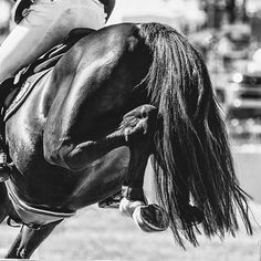 I took this at an ag show recently where I photographed showjumping for two days. I do find that if I don't put a little variety into my job I get a little stale, however I'm really looking forward to some paddock time this week with my favourites. And a visit with Matilda Mendl. #toowoombaphotographer #calicopony #showjumping #equinephotographer