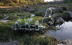Nomadic plants by Gilberto Esparza