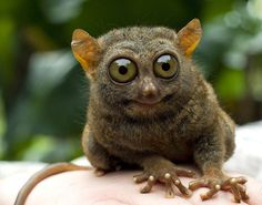 35 Animals Who Are Kind Of Worried About You