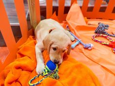 Everything you need to know about Wrangler, TODAY's 'puppy with a purpose'