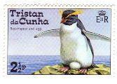 トリスタン・ダ・クーニャのイワトビペンギン