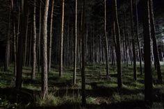Carta da parati con un maestoso bosco fitto