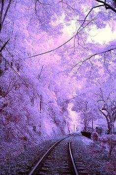 Purple Winter wonderland railway in Nantou, Taiwan Whats Wallpaper, Purple Wallpaper Iphone, Beautiful Nature Wallpaper, Beautiful Landscapes, Beautiful Places To Travel, Beautiful World, Digital Foto, Purple Aesthetic, Aesthetic Backgrounds