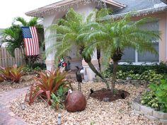 Pygmy Date Palm, Robellini Palm (<i>Phoenix roebelenii</i>) Dave's garden