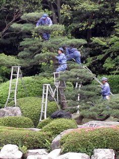 Ohori Park Japanese Garden in Fukuoka Japanese Garden Landscape, Japanese Garden Design, Japanese Gardens, Succulent Bonsai, Bonsai Plants, Japanese Tree, Japan Garden, Garden Maintenance, Parks