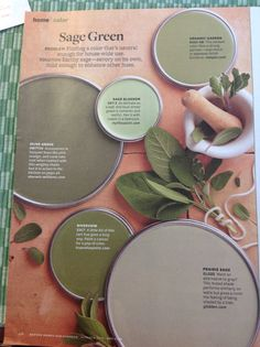 Sage greens from Better Homes & Gardens.