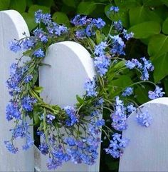 Forget Me Not Cottage Trailing Flowers, Blue Flowers, Wild Flowers, Flower Crown, Flower Art, Forget Me Not Blue, Ocean Wallpaper, Blue Garden, Garden Gates