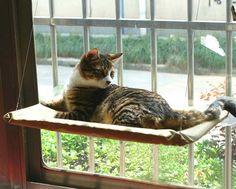19 TRUQUES-E-DICAS GENIAIS PARA QUEM TEM GATOS Macetes que todo apaixonado por gatos precisa conhecer.